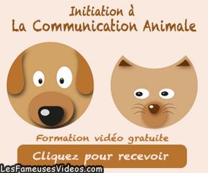 INITIATION A LA COMMUNICATION ANIMALE